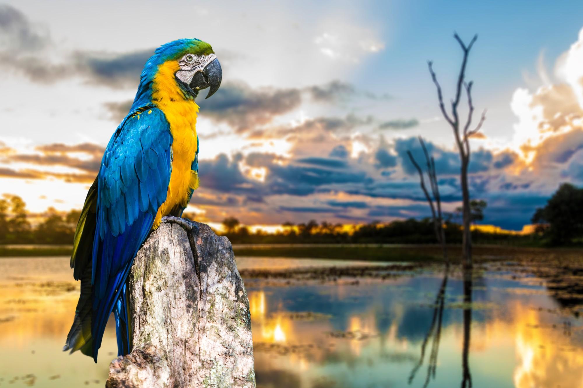 aventura no pantanal